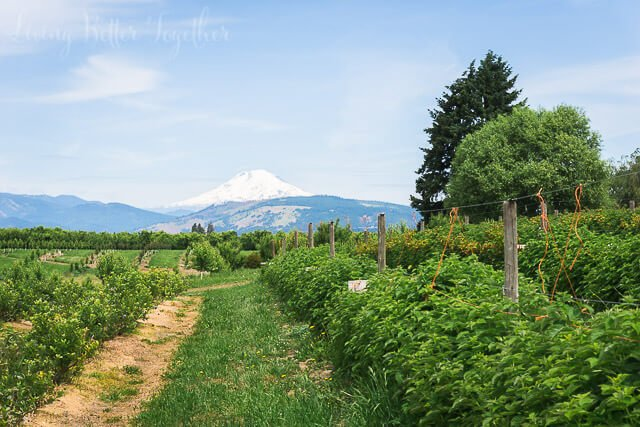 If you're visiting Oregon, you have to tour the Mt. Hood and Columbia River Gorge Scenic Loop.