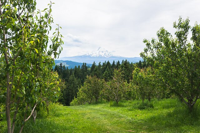 sakura-lodge-mt-hood-oregon (1 of 1)