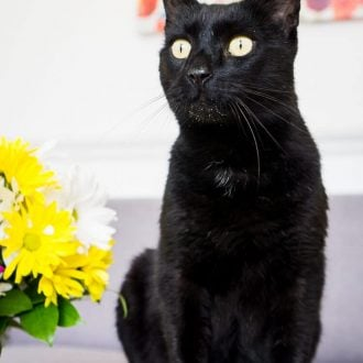 Do you have a cat at home that you like to make feel really special? Meet Kreacher, our rescue kitty, he takes a back seat to the dog some days, but we still love him and try to spoil him as best we can!