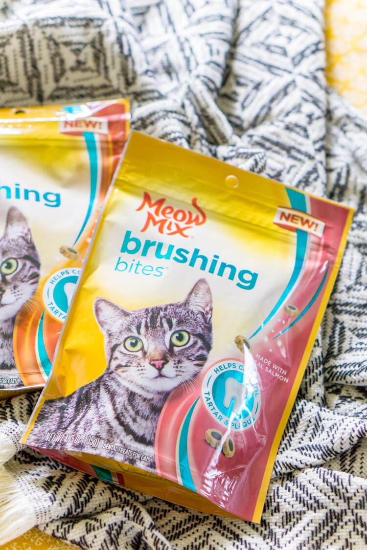meow-mix-brushing-bites-healthy-cat-tips-1-3