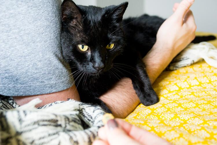 meow-mix-brushing-bites-healthy-cat-tips-5