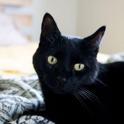 9 Tips For A Healthy Cat