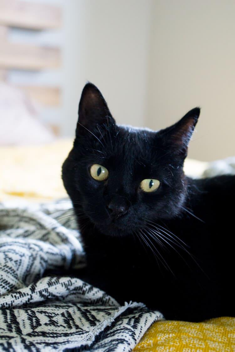 meow-mix-brushing-bites-healthy-cat-tips-8
