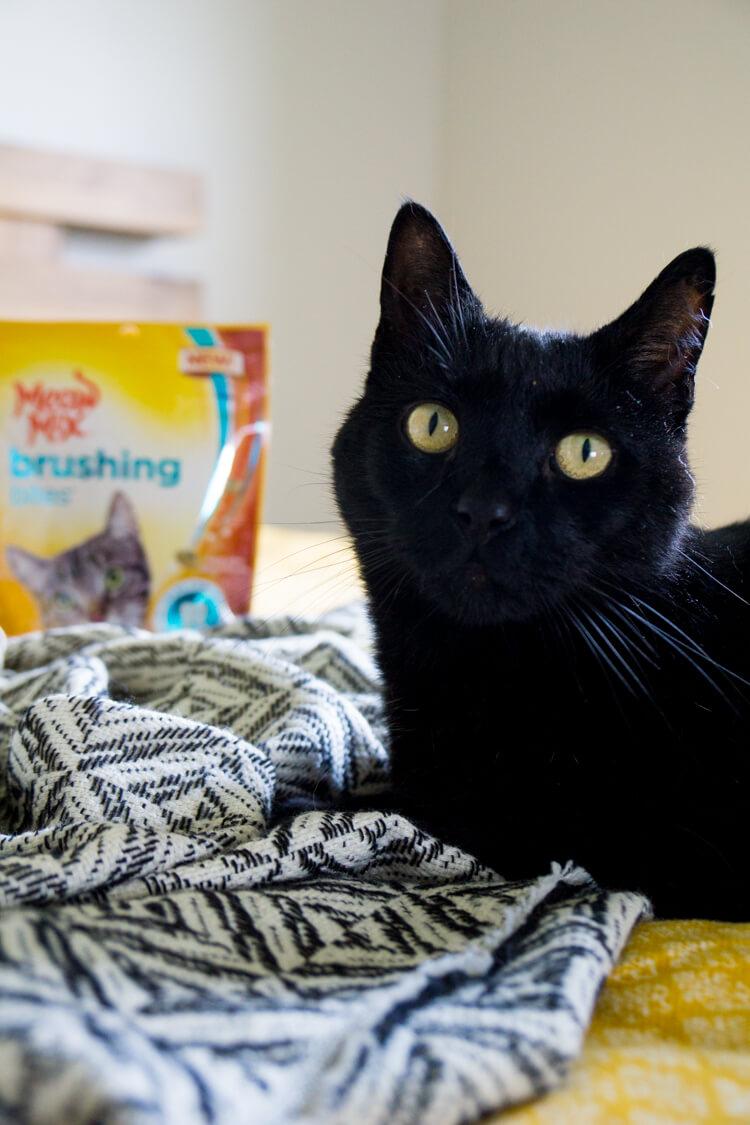 meow-mix-brushing-bites-healthy-cat-tips-9