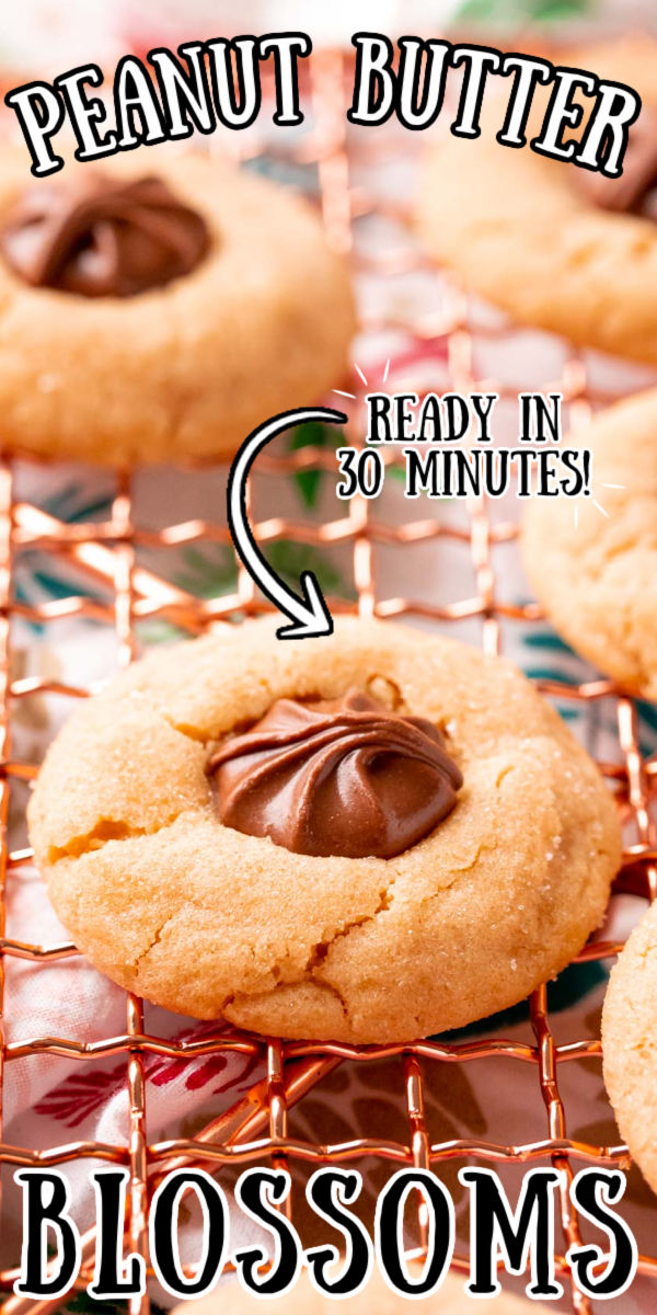 Peanut Butter Blossoms are a classic peanut butter cookie recipe everyone loves. Chocolate candy is nestled in the center of a chewy sugar-coated cookie for an easy and delicious dessert! via @sugarandsoulco