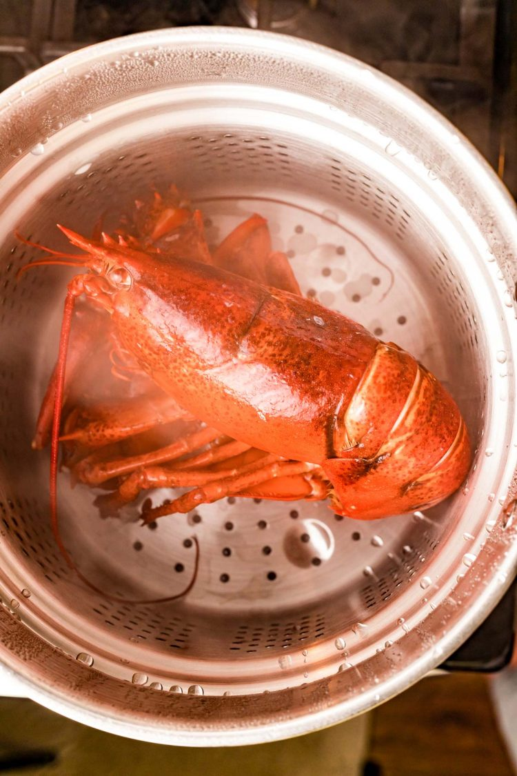 Overhead photo of a lobster being steamed in a pot.